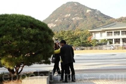 在韩国总统府内的一处法轮功真相点旁边,一群中国游客正在观看一棵松树上开放的优昙婆罗花。(摄影:全宇/大纪元