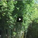 枯木逢春-下(視頻)